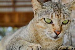 Suo un gatto Fotografia Stock Libera da Diritti