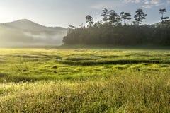 Suoi近Tia Ho Tuyen Lam湖,大叻市风景城市,越南 免版税图库摄影
