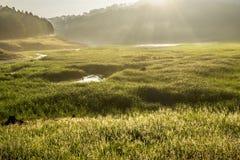 Suoi Tia风景近的Ho Tuyen Lam湖,大叻市城市,越南 库存照片