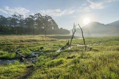 Suoi Tia scenic in the sunshine near Ho Tuyen Lam lake, Da Lat city, Vietnam Royalty Free Stock Images