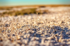Suoli salini della steppa del Kazakistan Fotografia Stock