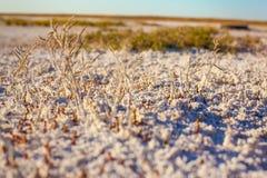 Suoli salini della steppa del Kazakistan Fotografie Stock Libere da Diritti