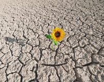 Suolo asciutto e pianta crescente Fotografia Stock Libera da Diritti