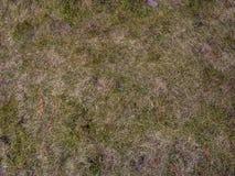 Suolo con il fondo dell'erba secca Struttura senza cuciture della terra con le erbe asciutte fotografia stock