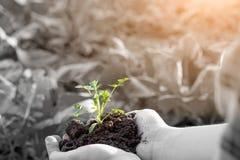 Suolo della pianta del bambino della tenuta dell'agricoltore, qualit d'esame dell'agronomo maschio Fotografia Stock Libera da Diritti
