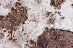 Suolo della primavera Fotografia Stock