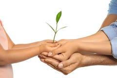 Suolo della tenuta della famiglia con la pianta verde in mani Fotografia Stock Libera da Diritti