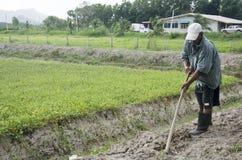 Suolo di scavatura dell'uomo anziano a terra per la piantatura dell'albero e la coltura del veg fotografia stock