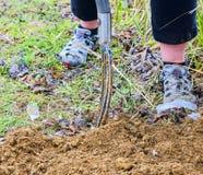 Suolo di scavatura della donna con la forcella del giardino Concetto di hobby e di giardinaggio Facendo il giardinaggio nella sor Immagine Stock