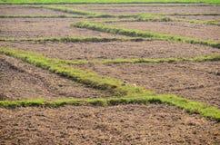 Suolo ed erba di agricoltura della terra Immagini Stock