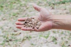 Suolo in mano dell'agricoltore Immagini Stock Libere da Diritti