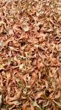 Suolo in pieno delle foglie Fotografia Stock Libera da Diritti