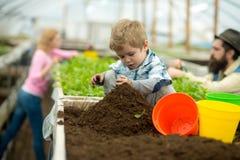 Suolo puro arricchimento puro nel suolo lavoro del bambino piccolo con suolo puro suolo puro in serra Giardinaggio immagini stock libere da diritti