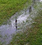suolo umido con acqua che emerge fotografie stock