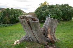 Suomenlinna Island. History. Stump. Bird on an old stump Stock Photos