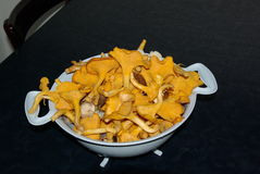 Suomi, Kuopio. Still life with chanterelle mushrooms Royalty Free Stock Photography