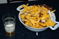 Suomi, Kuopio. Still life with chanterelle mushrooms and glass of beer Stock Images