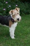 Suoni del Doggy Immagine Stock