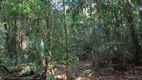 Suoni della giungla video d archivio