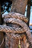Supłająca arkana w wielkim drzewie Obrazy Stock