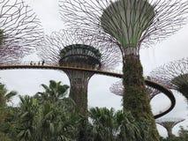 Super-alberi Fotografia Stock Libera da Diritti