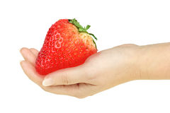 Super-big red strawberry in a hand Stock Images