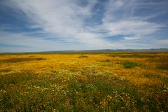 Super Bloom royalty free stock photography
