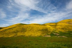 Free Super Bloom Spring Royalty Free Stock Images - 139043729