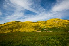 Super Bloom Spring royalty free stock photos