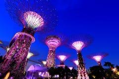 Super Bomen bij de Tuinen van Singapore door de Baai Stock Foto