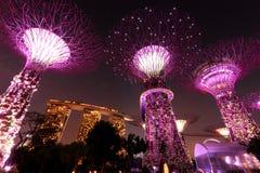 Super Bomen bij de Tuinen van Singapore door de Baai Stock Fotografie