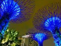 Super bomen bij nacht - de botanische tuin van Singapore ` s Royalty-vrije Stock Foto