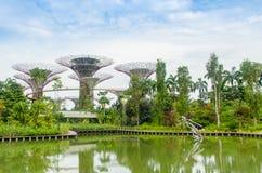 Super boom bij Tuin door de baai Stock Foto