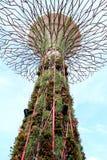 Super boomtribunes in Singapore tuin Stock Foto's