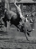 Super bull 2 Royalty Free Stock Photo