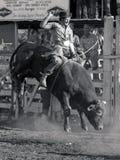 Super bull 1 Royalty Free Stock Photo