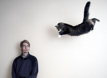 Super Cat. Maine Coon kitty cat jumping in mid air to pounce his master Stock Image