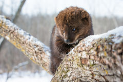 Super close-up of fisher royalty free stock photography