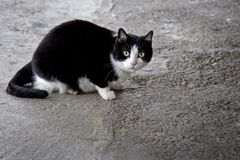 Cute cat. Super cute cats with innocent eyes Stock Photography
