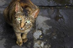 Cute cat. Super cute cats with innocent eyes Stock Image