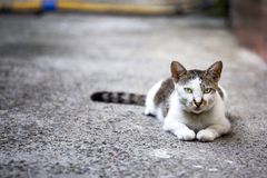 Cute kitten. Super cute cats with innocent eyes Stock Photos