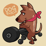 Super dog. A super strong muscle dog and dumbbells Royalty Free Stock Images