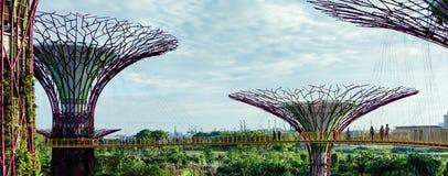 Super drzewa Zdjęcia Stock