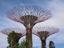Super drzewa Zdjęcie Royalty Free