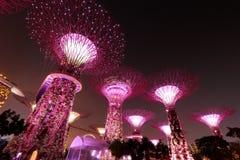 Super drzewa przy Singapur ogródami zatoką Obraz Royalty Free