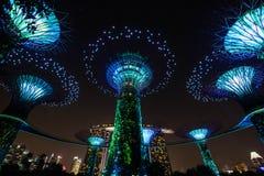 Super drzewna paza przy ogródami zatoką zdjęcia royalty free