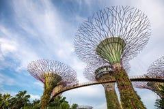 Super Drzewny gaj w zmierzchu świetle zdjęcia royalty free