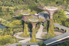Super drzewo gaj przy ogródami zatoką Obraz Stock