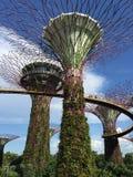 Super drzewo w ogródzie zatoką Fotografia Stock