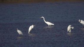 super egret zbiory